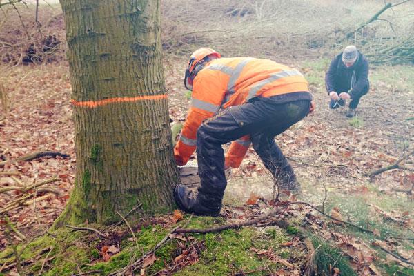 Banken uit tilburgse bomen Seats2meet Tilburg Spoorzone bomen kappen